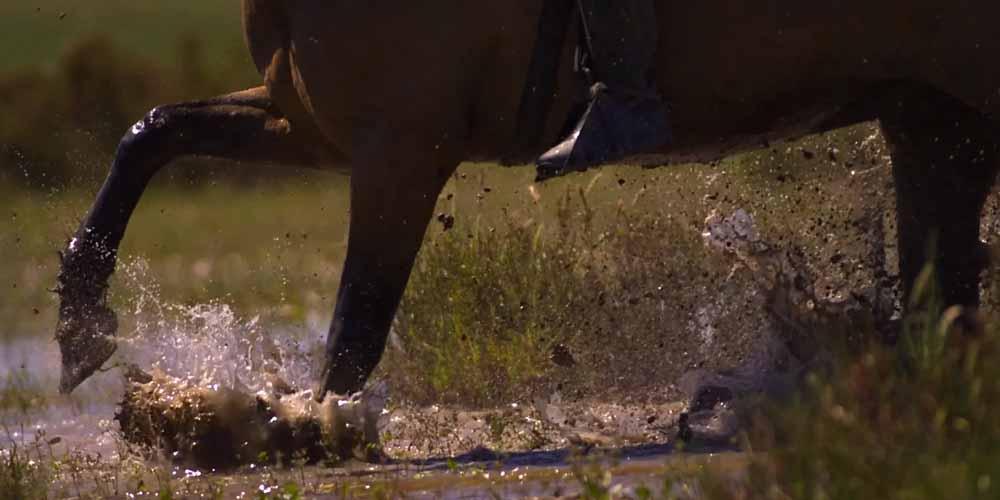 «Mesteño» El caballo de la Marisma que conquistó América